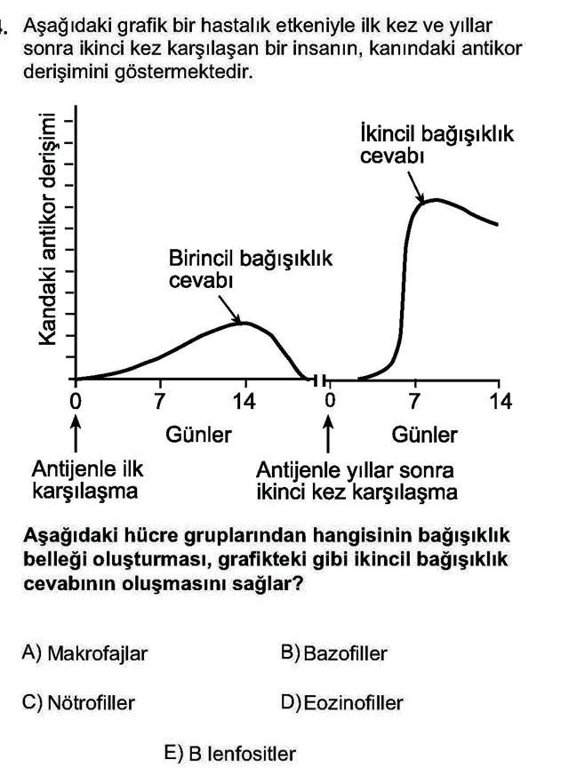 LYS Biyoloji Soruları 14. Soru