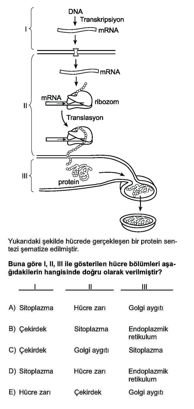 LYS Biyoloji Soruları 4. Soru