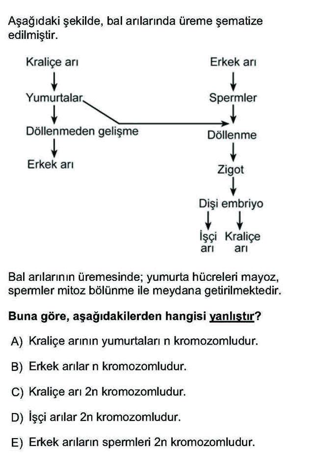 LYS Biyoloji Soruları 11. Soru