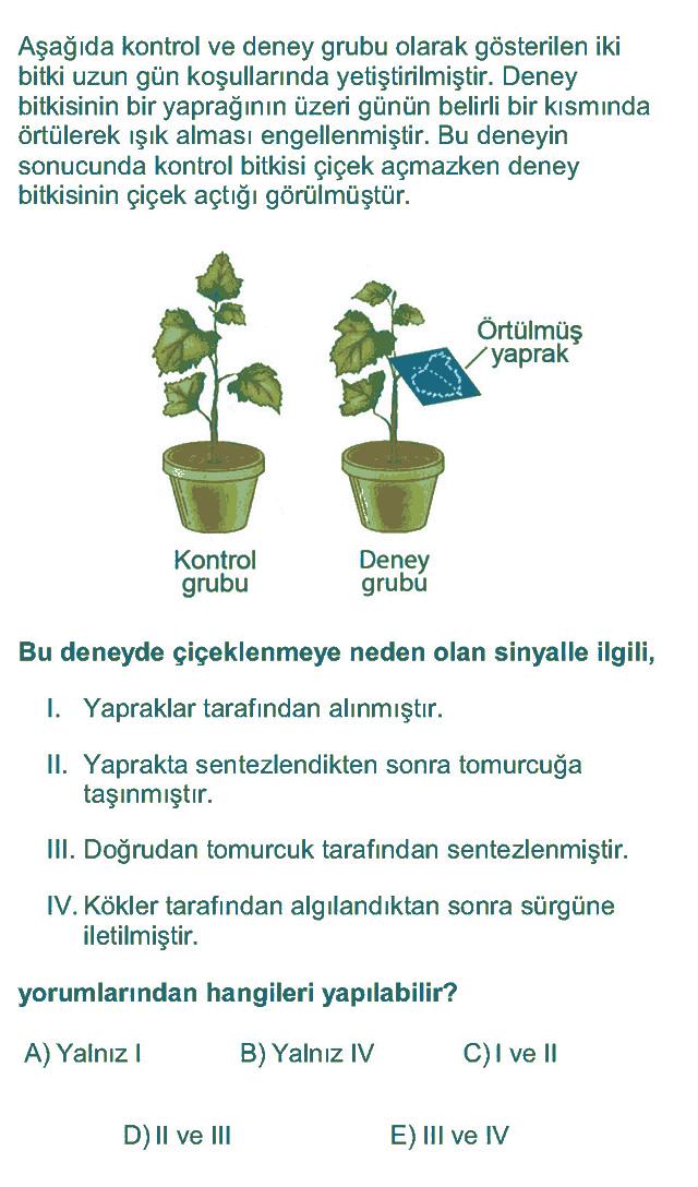 LYS Biyoloji Soruları 13. Soru