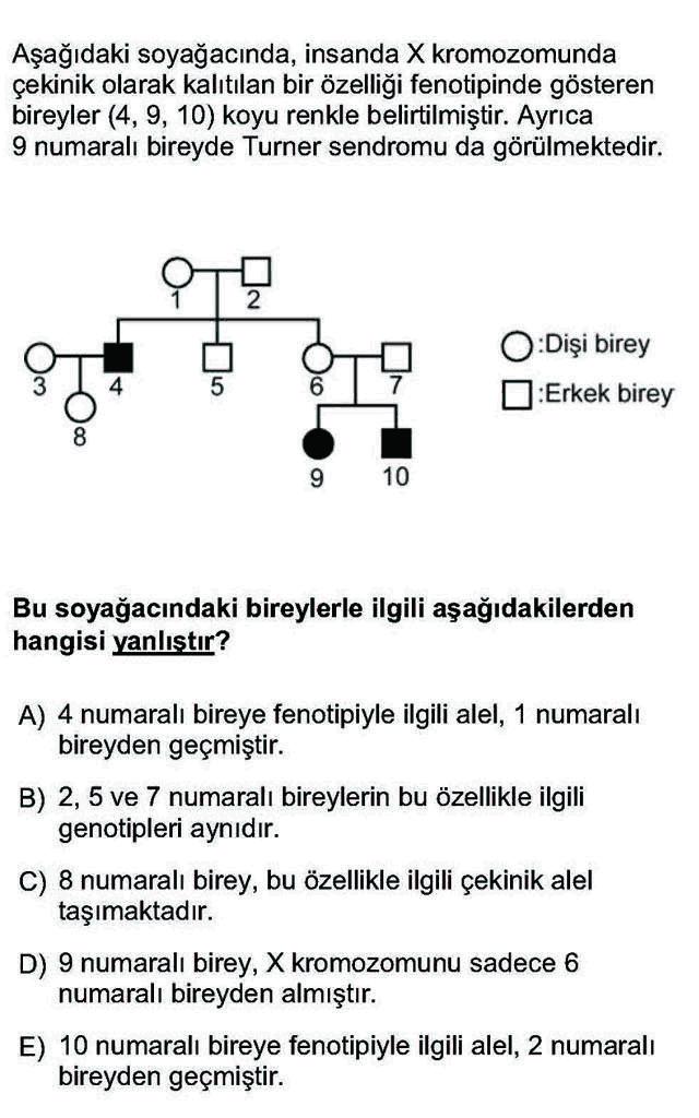 LYS Biyoloji Soruları 17. Soru