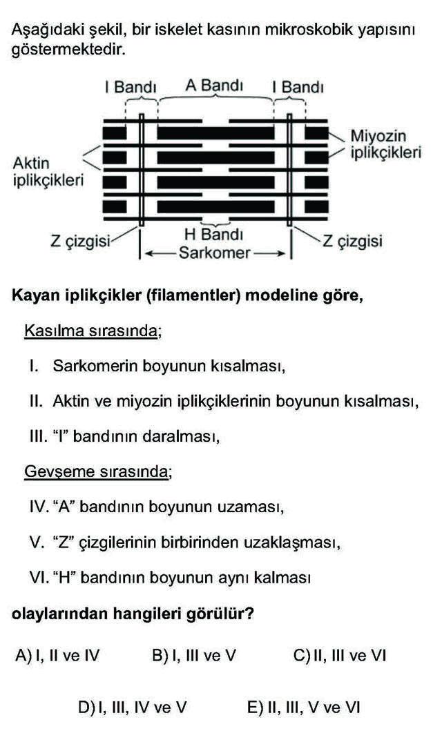 LYS Biyoloji Soruları 28. Soru