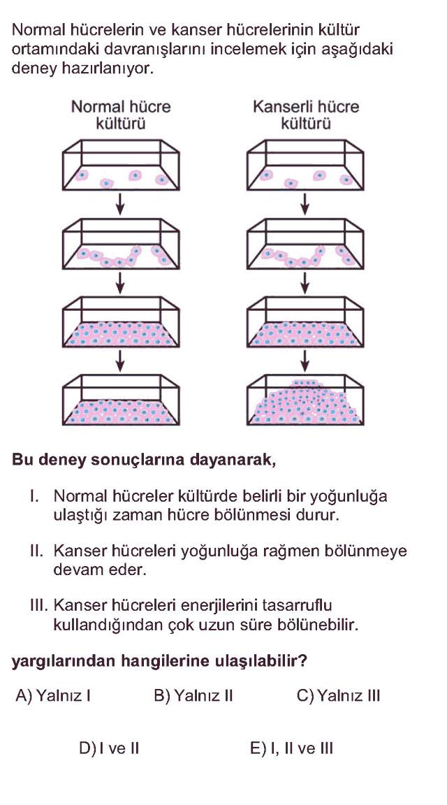 LYS Biyoloji Soruları 9. Soru