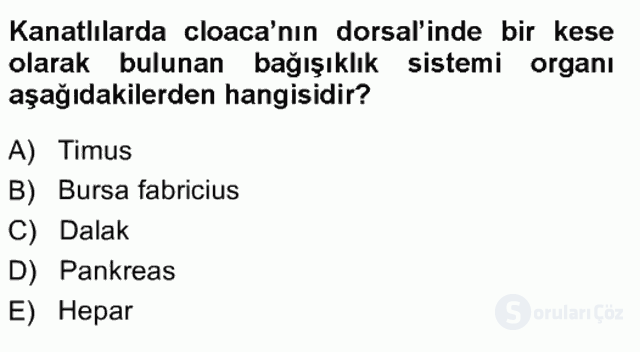 Temel Veteriner Anatomi Tek Ders Sınavı 20. Soru