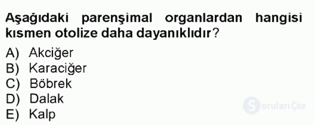 Temel Veteriner Patoloji Tek Ders Sınavı 4. Soru