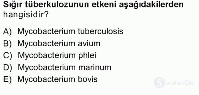 Veteriner Mikrobiyoloji ve Epidemiyoloji Tek Ders Sınavı 11. Soru