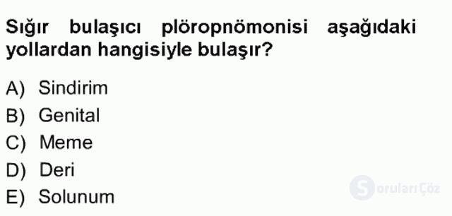 Veteriner Mikrobiyoloji ve Epidemiyoloji Tek Ders Sınavı 16. Soru