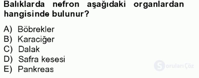 Su Ürünleri Tek Ders Sınavı 5. Soru