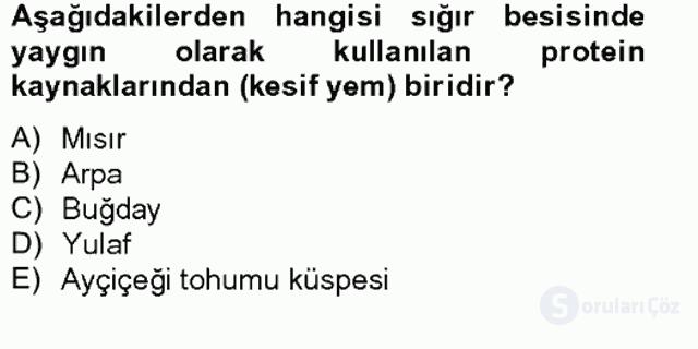 Hayvan Besleme Bahar Final 11. Soru