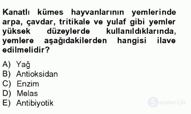 Hayvan Besleme Bahar Final 6. Soru
